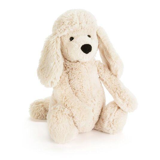 Medium Bashful Poodle Pup