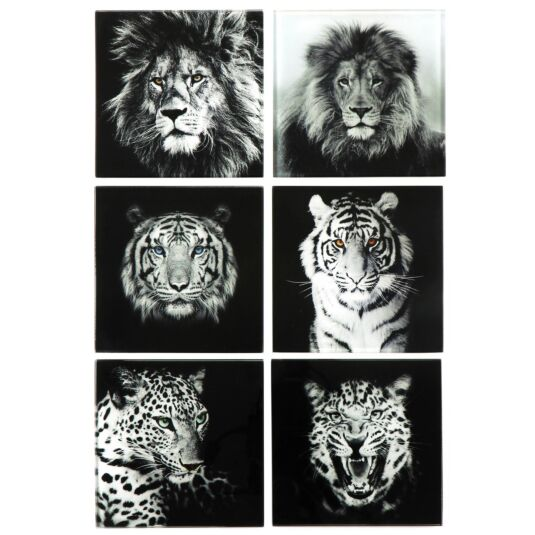 Big Cats Glass Coasters – Set of Six