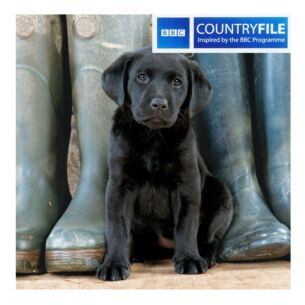 Country File - Black Labrador Puppy Greetings Card