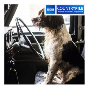 Country File - Spaniel in a Land Rover Greetings Card