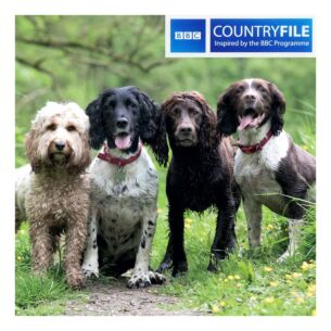 Country File - Cockapoo and Spaniels Greeting Card