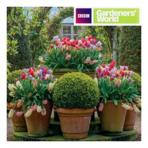 Gardeners' World - Tulip Displays Greeting Card