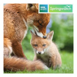 Springwatch – Red Fox Greeting Card