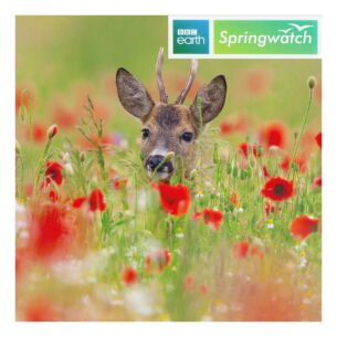 Springwatch – Roe Deer Buck Greeting Card