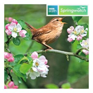 Springwatch – Wren Greeting Card