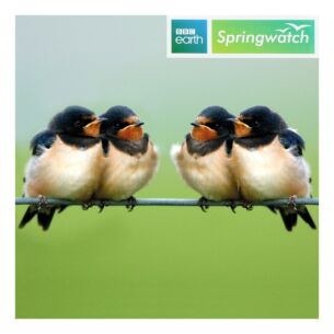 Springwatch – Swallows Greeting Card