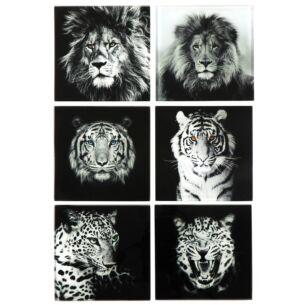 Big Cats Glass Coasters – Set of Six