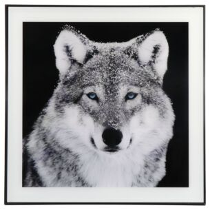 Large Monochrome Wolf Print with Black Frame