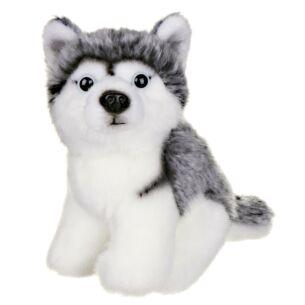 Small Husky Dog