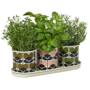 Orla Kiely Set of 3 'Climbing Rose' Herb Pots & Tray